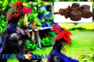manfaat gula merah untuk ayam