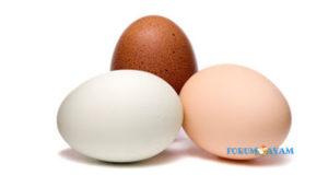 Manfaat Telur Ayam Kampung