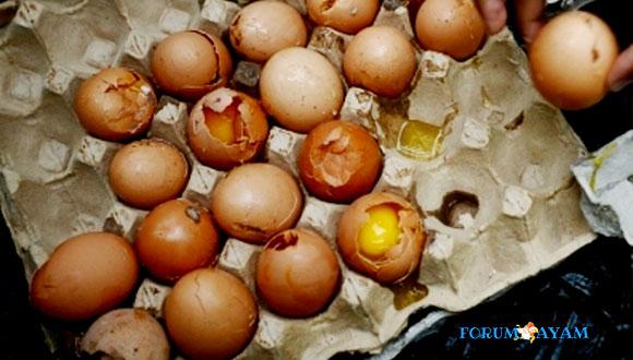 Cara Memilih Telur Ayam