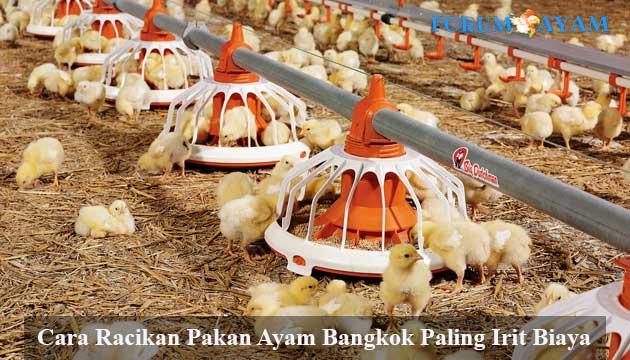 pakan ayam - agen sabung ayam
